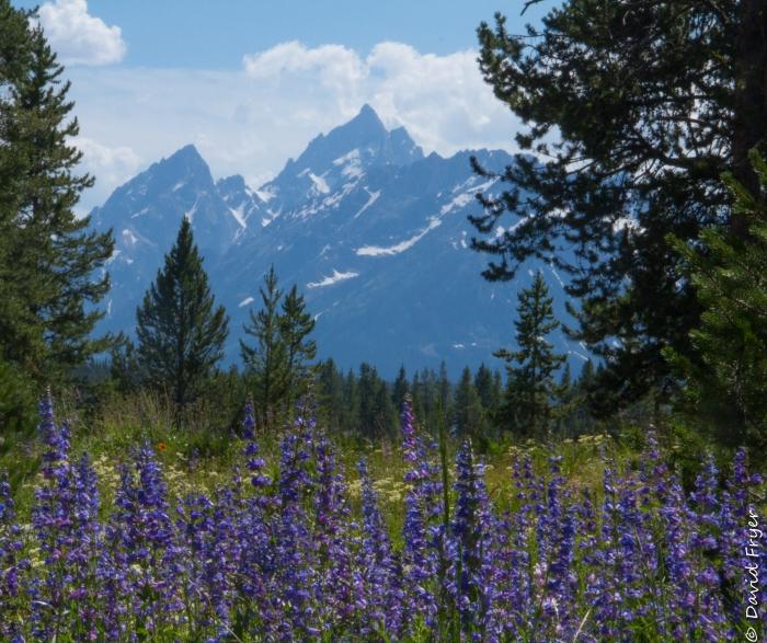 Grand Teton - Swan Lake-61
