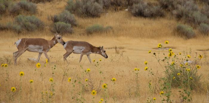 Antelope Island UT 2017_28