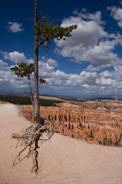 Bryce Canyon National Park UT 2017-191
