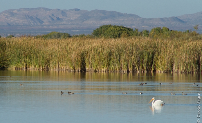 Bosque del Apache NM 2017-36