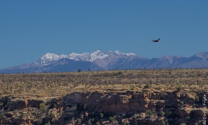 Mesa Verde National Park 2017-11