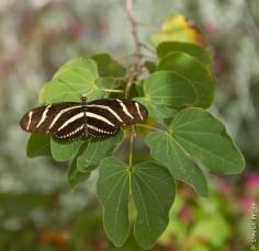 Desert Botanical Garden 2017-18