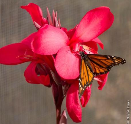 Desert Botanical Garden 2017-44