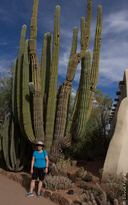 Desert Botanical Garden 2017-65