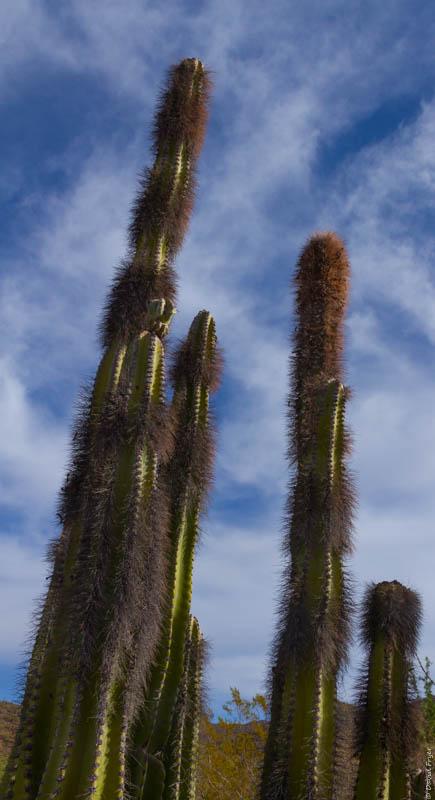 Desert Museum Tucson AZ 2017-5