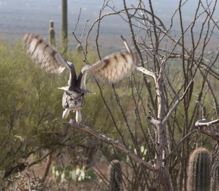 Desert Museum Tucson AZ 2017-9
