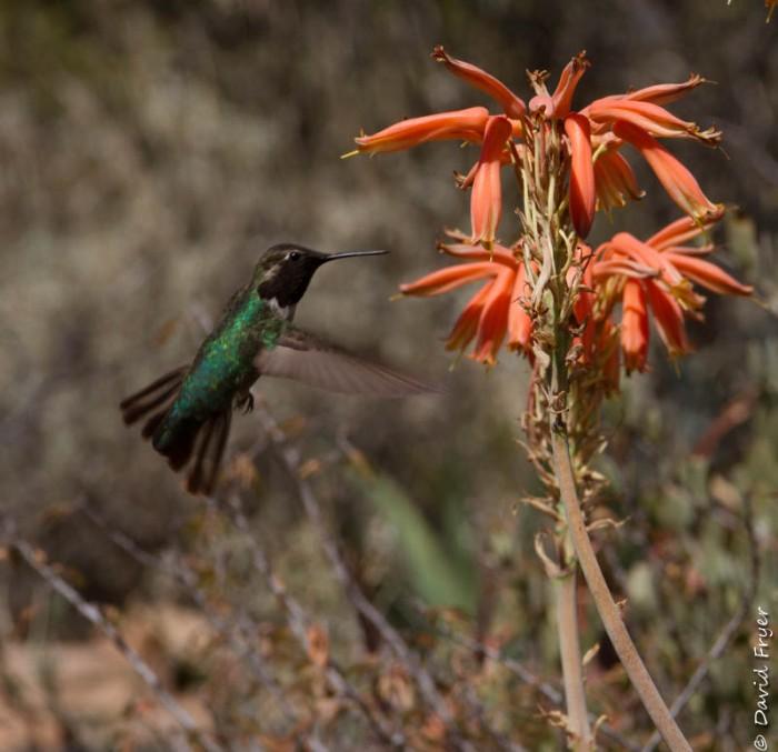 Boyce Thompson Arboretum AZ 2018-100