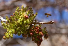 Boyce Thompson Arboretum AZ 2018-74