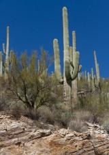 Mt Lemmon Tucson AZ 2018-9