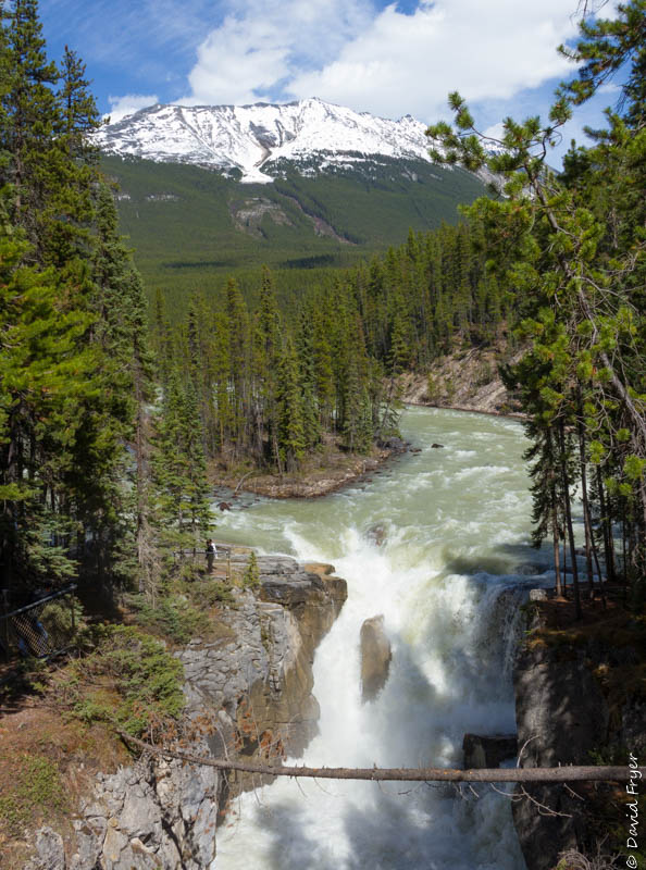 Jasper Icefields Parkway Athabasca and Sunwapta Falls-113