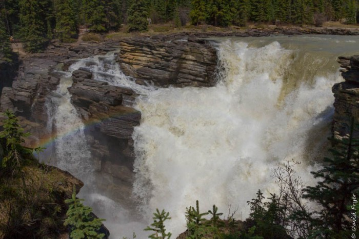 Jasper Icefields Parkway Athabasca and Sunwapta Falls-38