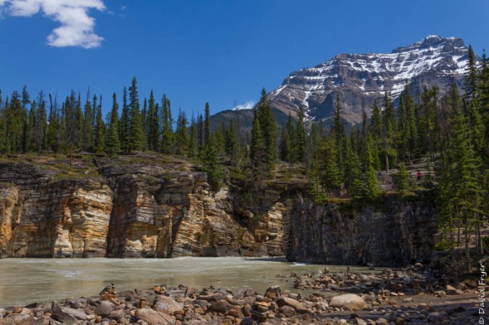 Jasper Icefields Parkway Athabasca and Sunwapta Falls-74