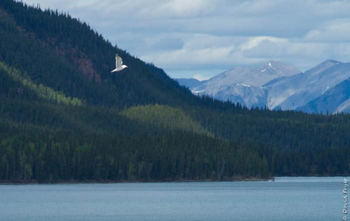 Muncho Lake BC 2018-140