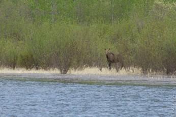 Muncho Lake BC 2018-156