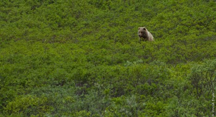 Denali National Park 2018-107-2