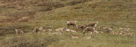 Denali National Park 2018-113