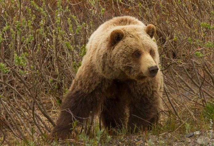 Denali National Park 2018-132