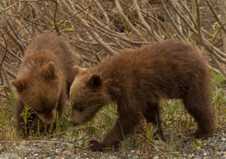 Denali National Park 2018-144