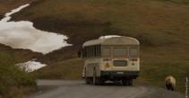 Denali National Park 2018-163