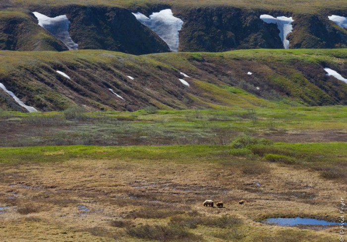 Denali National Park 2018-44-3