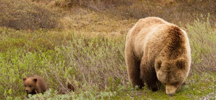 Denali National Park 2018-55-2