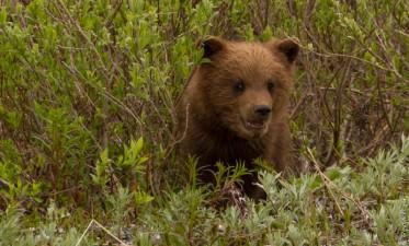 Denali National Park 2018-69-2