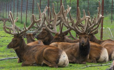 Alaska Wildlife Conservation Center Girdwood AK 2018-46