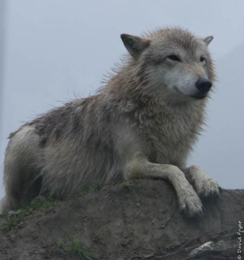 Alaska Wildlife Conservation Center Girdwood AK 2018-57
