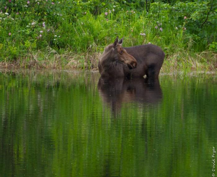 Denali State Park 2018-9-3
