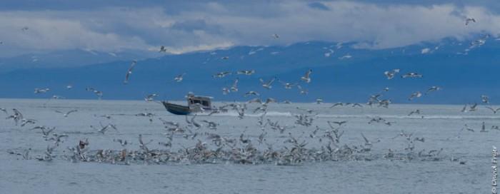 Homer Alaska 2018-16