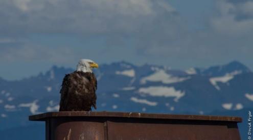 Homer Alaska 2018-294