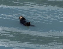Seward Kenai Fjords Alaska 2018-262