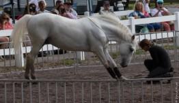 Lipizzaner Stallions FL 2019-11