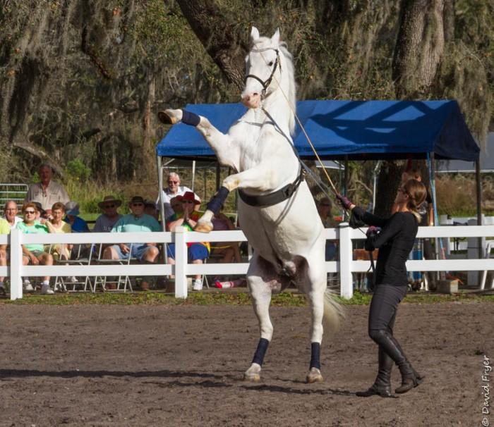 Lipizzaner Stallions FL 2019-40