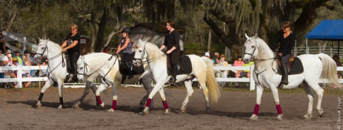 Lipizzaner Stallions FL 2019-63