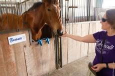Lipizzaner Stallions FL 2019-91
