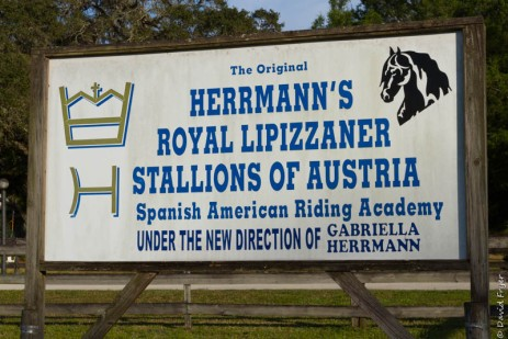 Lipizzaner Stallions FL 2019-94