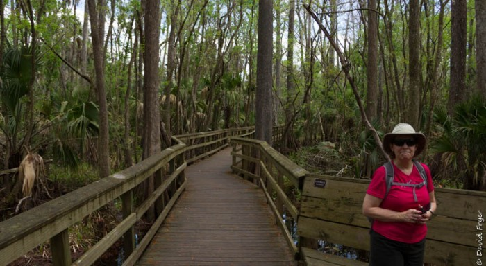 Highlands Hammock SP FL 2019-2-62
