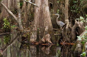 Highlands Hammock SP FL 2019-2-76