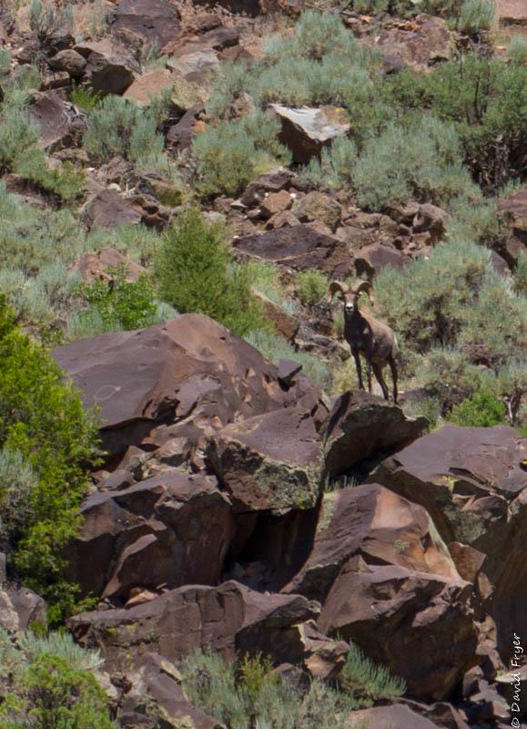 Taos NM June 2019-32-2