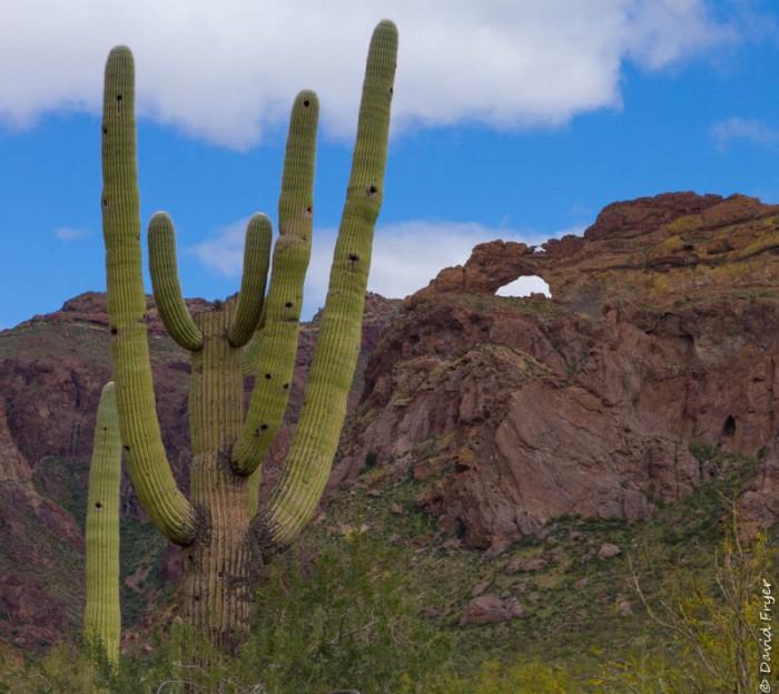 Organ Pipe Cactus NM March 2020-141
