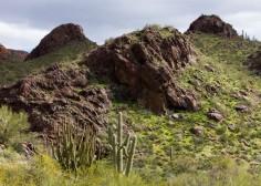 Organ Pipe Cactus NM March 2020-161
