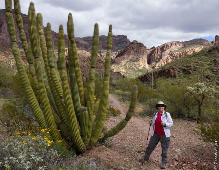 Organ Pipe Cactus NM March 2020-165