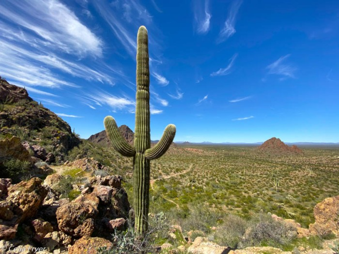 Organ Pipe National Monument March 2020-3