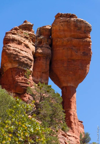 Organ Pipe Sedona and Camp Verde AZ April 2020-44