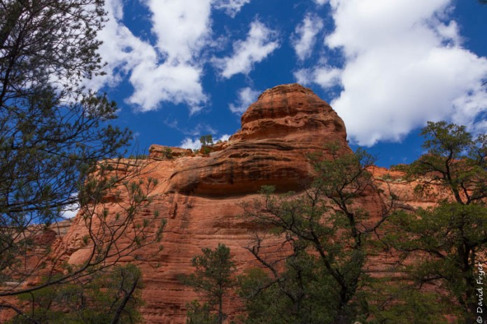 Organ Pipe Sedona and Camp Verde AZ April 2020-85