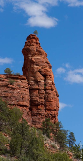 Organ Pipe Sedona and Camp Verde AZ April 2020-88