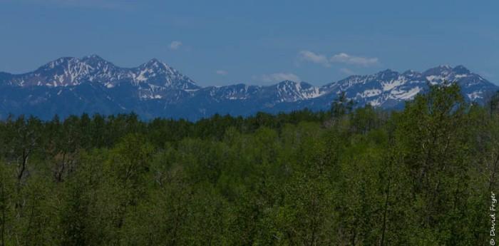 Wastch Mountain Midway Utah June 2020-102